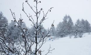storm day, nicklas ferin-1-3
