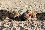 namibia, africa, naankuse, wild, cedric bernardini