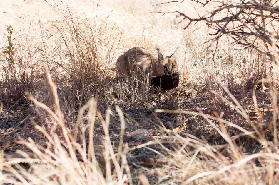 namibia, africa, naankuse, wild, cedric bernardini, kanaan