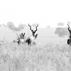 pretoria, south africa